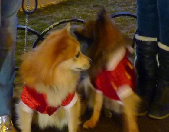 chiens-filles-MEHLHORN